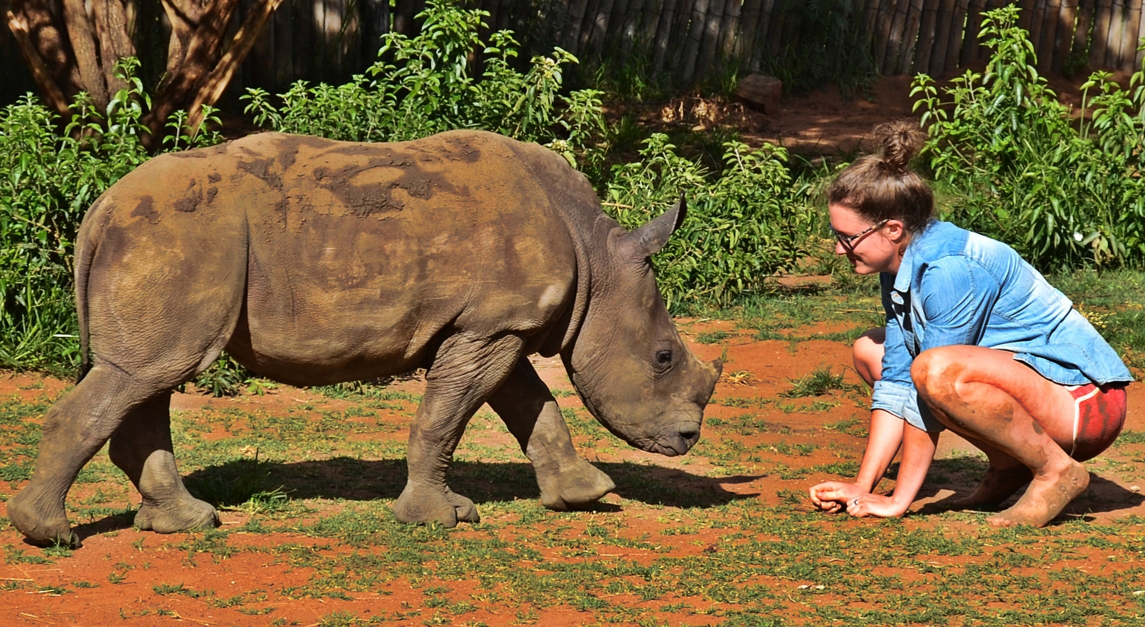 Rhino Orphans Left Behind By Ruthless Poachers Deserve Our