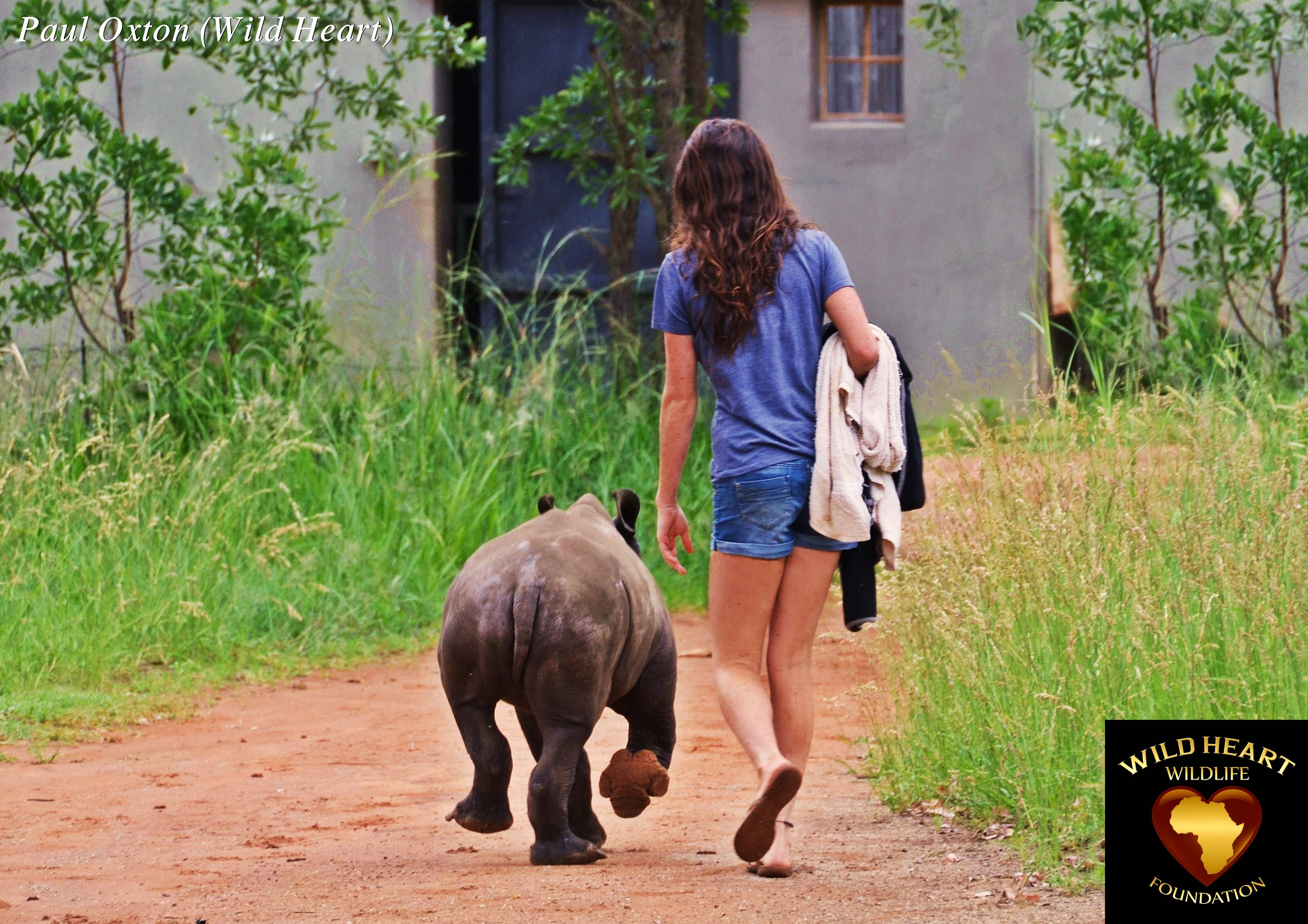 It Is Still A Very Long Road Ahead Before This Tiny Rhino Can Be Completely Rehabilitated And Returned To The Wild But Luckily For Her Heart Wildlife