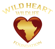 Wild Heart Wildlife Foundation Logo